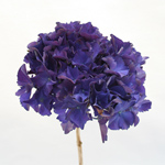 Hydrangea - Single Stem Purple