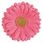 Mini Gerbera - 70 Stems Flamengo