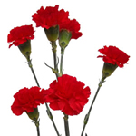 Mini Carnations - Red